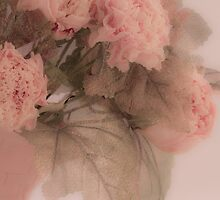 Dried Pink Peonies by Sandra Foster