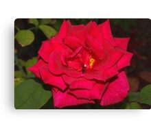 Ruby red with raindrops Canvas Print
