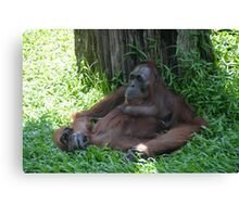 Chilling Orangutan  Canvas Print