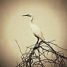 Egret Repose by kibishipaul