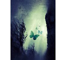 On The Wings of Chaos Photographic Print
