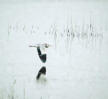 Wings Over Water by kibishipaul