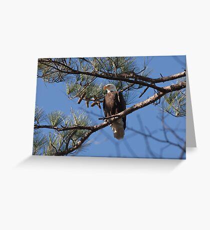 Nest Sentry, Bald Eagle, Jordan Lake, NC Greeting Card