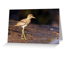 Water Thick-knee Greeting Card