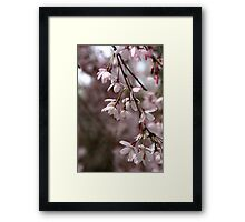 Whisper in the Breeze Framed Print