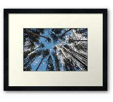 swaying tops of bare trees  Framed Print