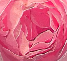 Digitally manipulated exploding Pink English rose as seen from above  Sticker