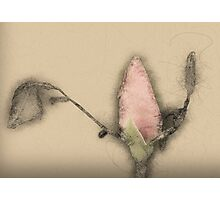 Digitally manipulated Red Rose bud Photographic Print