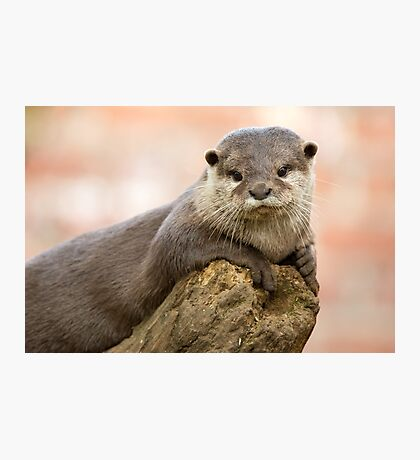 Otter 2 Photographic Print