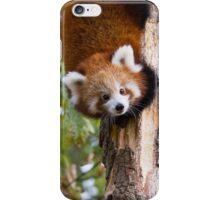 Red Panda 2 iPhone Case/Skin