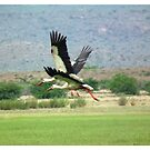 Storks in flight by Shaun Swanepoel