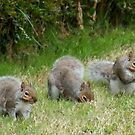 Three little foragers - image 1 by missmoneypenny
