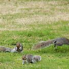 Three little foragers - image 2 by missmoneypenny