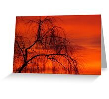 Willow over orange sky Greeting Card