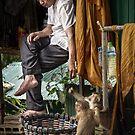Monk & Monkeys by Michiel de Lange