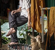 Monk & Monkeys by Michiel de Lange