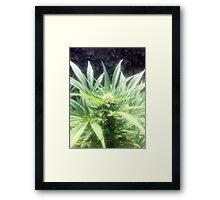 Nice green flower Framed Print