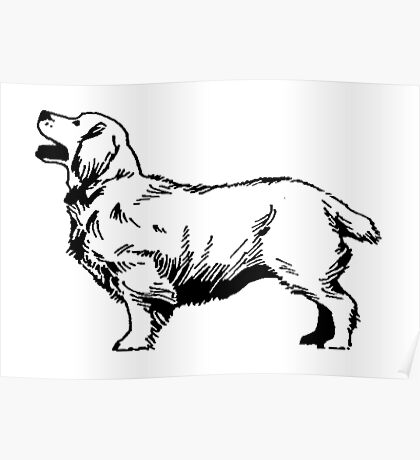 Clumber Spaniel Poster