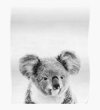 Koala Poster
