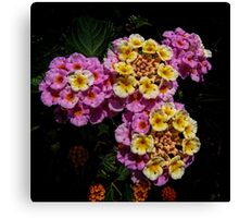 Pink and Yellow Blooms Canvas Print