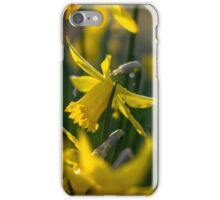 Lovely Daffodils iPhone Case/Skin