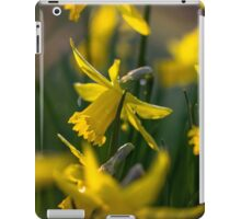 Lovely Daffodils iPad Case/Skin
