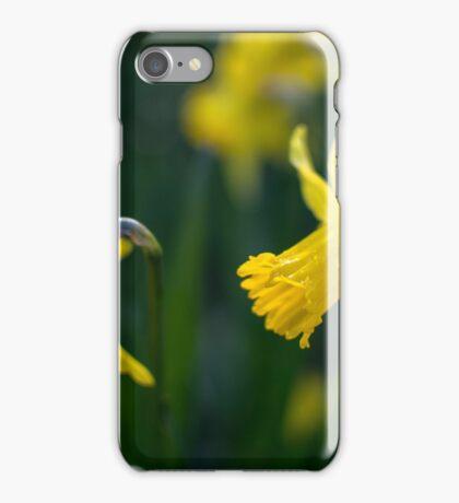 Daffodil brothers iPhone Case/Skin