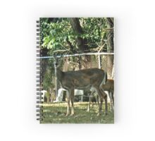 """"""" 'THE CEMETERY', a Series, #16, Nothin' Like Lunch at the Local Cemetery""""... prints and products Spiral Notebook"""