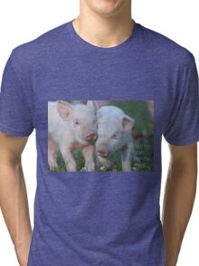Cute Piglets Poster for Vegans/Vegetarians Tri-blend T-Shirt