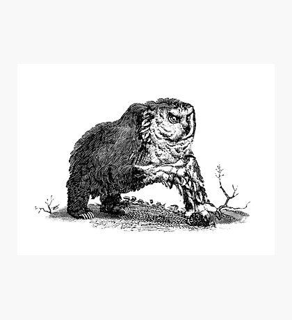 Medieval Owlbear Photographic Print