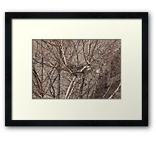 empty bird nest Framed Print