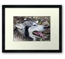 Wolf Dog Framed Print