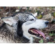 Wolf Dog Photographic Print