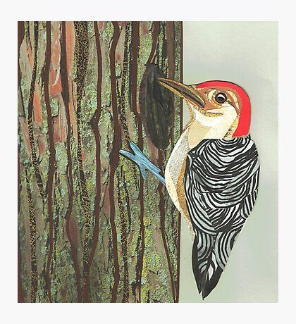 Woodpecker Photographic Print