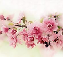 Faded Blossom by Jessica Jenney