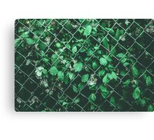 The Day I Watched Myself across the Fence Canvas Print