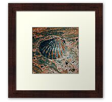 Beach Dweller 1 Framed Print