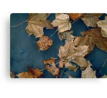 Maple Leaves in the Water Canvas Print