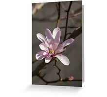 Sunny Pink Magnolia Blossom Greeting Card