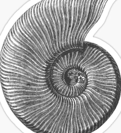Ammonite Fossil Sticker