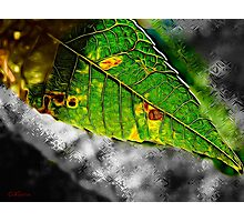 A Leaf from a Tree Photographic Print