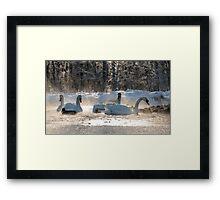 white swans on the frozen lake  Framed Print