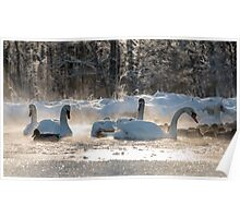 white swans on the frozen lake  Poster