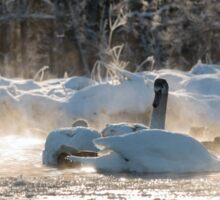 white swans on the frozen lake  Sticker