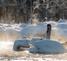 white swans on the frozen lake  Sticker
