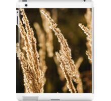 Grass spikelet on the field at sunset iPad Case/Skin