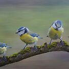 Four Little Tits by M.S. Photography/Art