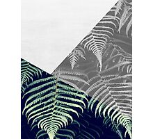 Fern Abstract Photographic Print
