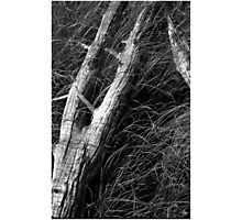 Driftwood and Sawgrass Monochrome Photographic Print