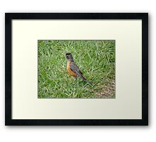 Hunting worms Framed Print